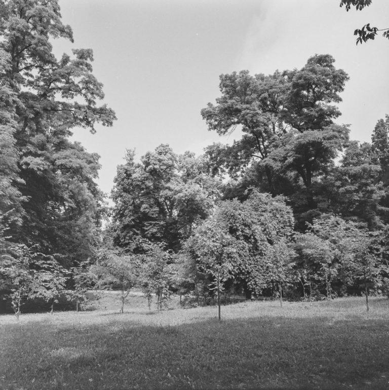 Bejsce Park