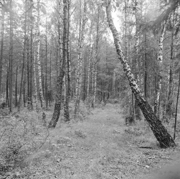 Site of former Błotnica mine near Stąporków