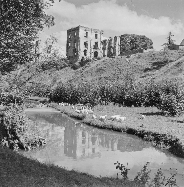 Castle hill – geese