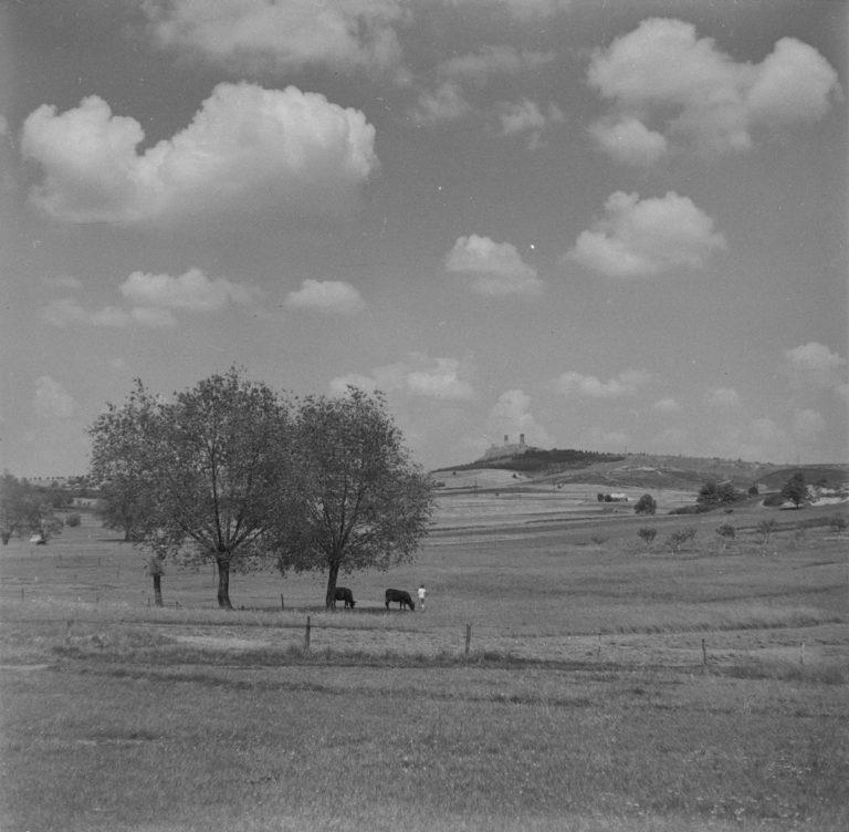 Widok na zamek z drzewami i krzewami