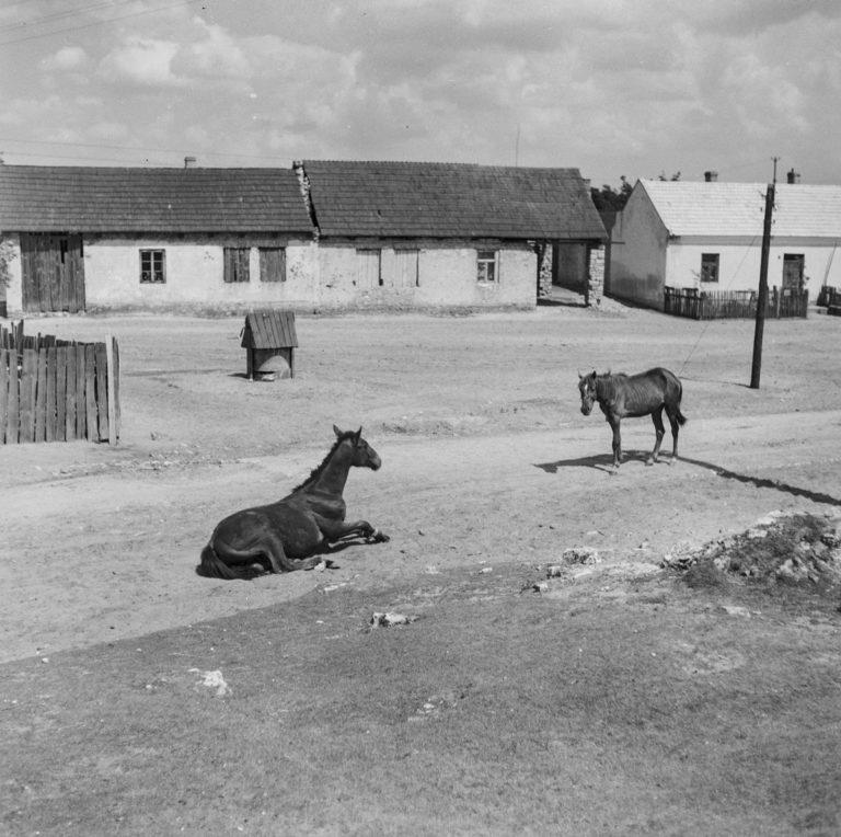 Małe miasteczko (konie na ulicy)