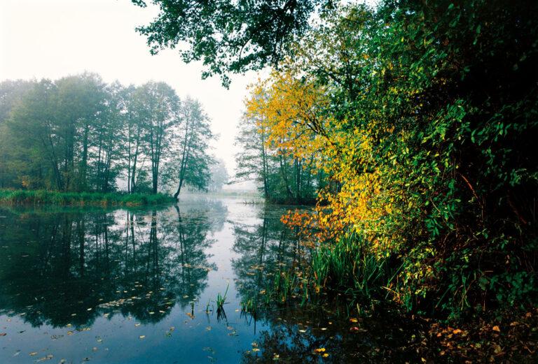 Rzeka Czarna Konecka