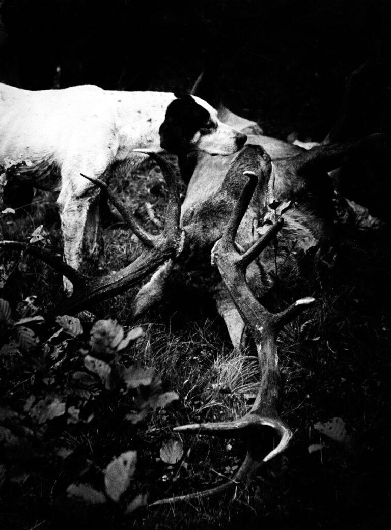 Zabiłem byka