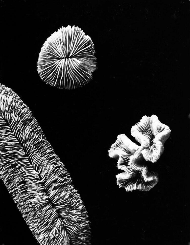 Motywy morskie