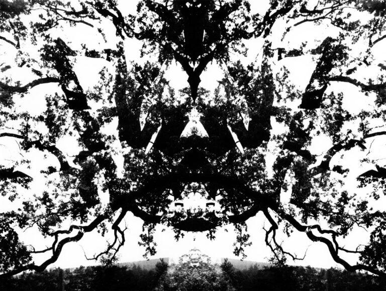 Maska (z cyklu drzewa)