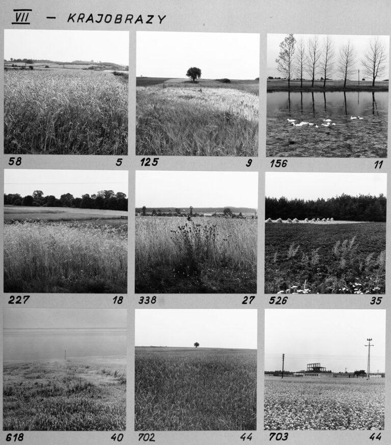 VII – Krajobrazy