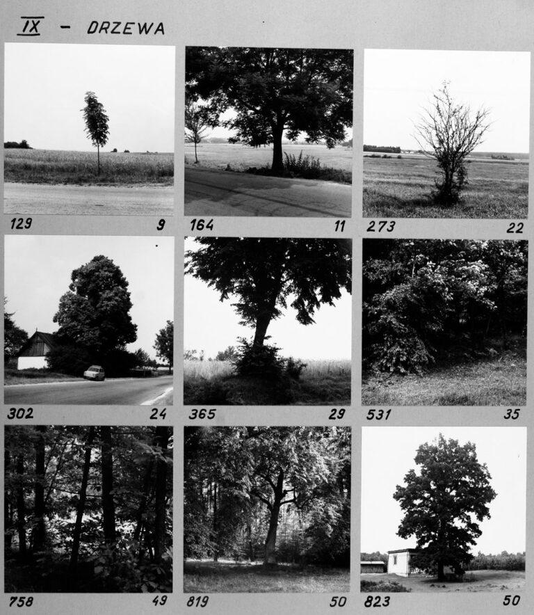 IX – Drzewa