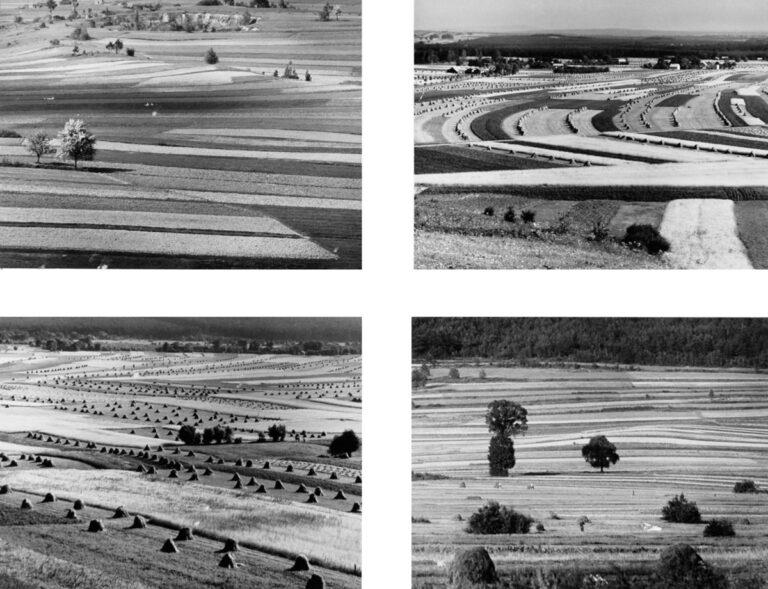 9B Field strips