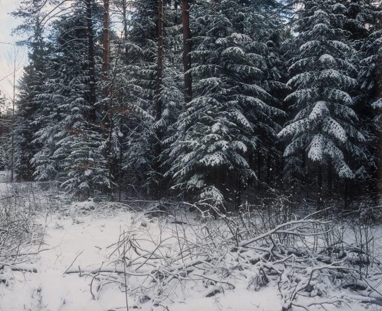 Zagnańsk forests